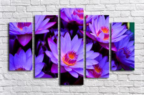 Модульная картина Лотосы фиолетовые