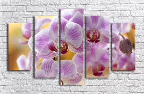 Модульная картина Розовые орхидеи