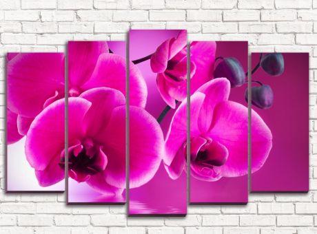 Модульная картина Орхидея розовая