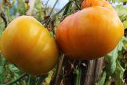 Томат Большой Оранжевый Полосатый (З.Г)