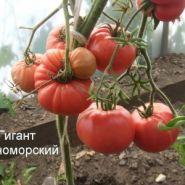 Томат Гигант Черноморский (З.Г)