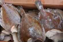 Камбала пятнистая без головы тушка 500-700 гр штучная заморозка  Мурманск от 10 кг