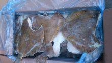 Камбала пятнистая без головы тушка от 1 кг (штучная заморозка) Мурманск от 10 кг