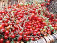 Дикие помидоры Lycopersicon