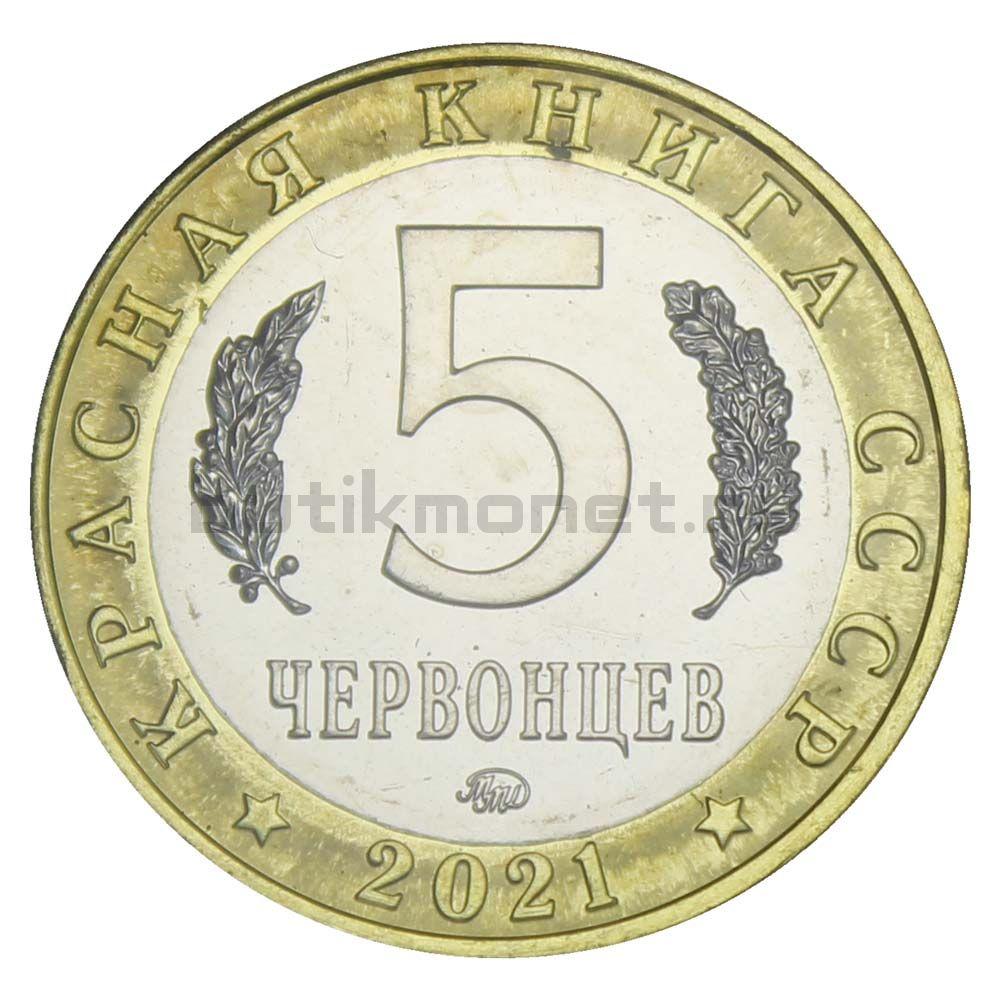 Россия Монетовидный жетон 5 червонцев 2021 ММД Шмель Спорадикус (Красная Книга)