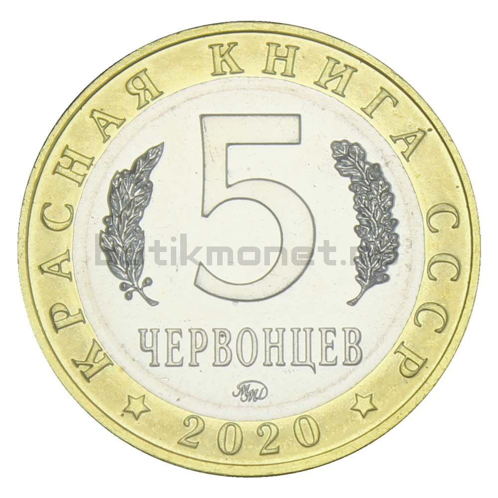 Россия Монетовидный жетон 5 червонцев 2020 ММД Малоазиатский Тритон (Красная Книга)