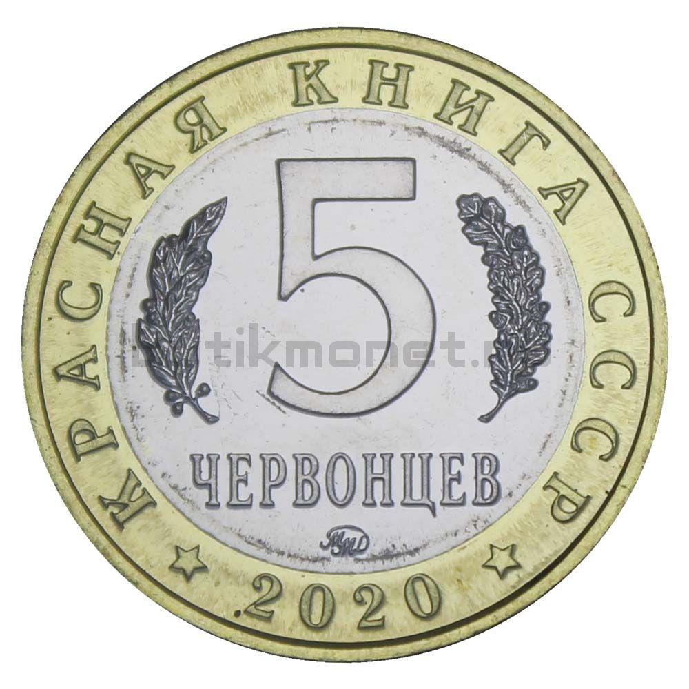 Россия Монетовидный жетон 5 червонцев 2020 ММД Мандаринка (Красная Книга)