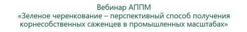 [АППМ] Зеленое черенкование перспективный способ получения корнесобственных саженцев (Ирина Окунева)