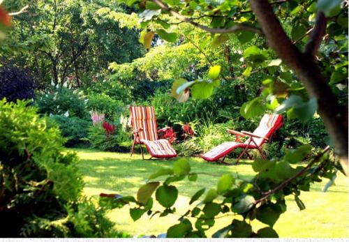 Тонкости устройства газонов в дачном саду (Наталья Мягкова)