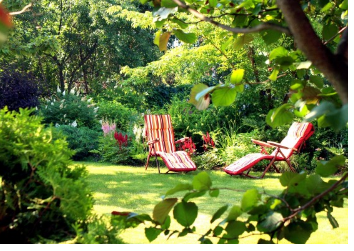 С чего начать переделку старого сада? (Наталья Мягкова)