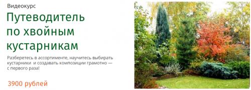 Путеводитель по хвойным кустарникам (Наталья Мягкова)