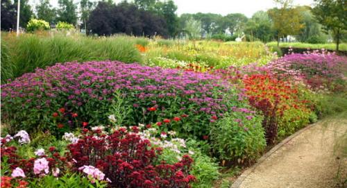 Принципы подбора растений для неприхотливого цветника (Наталья Мягкова)