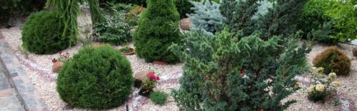 Онлайн экспресс-курс 'Виды хвойных растений и композиции из них' (Наталья Мягкова)