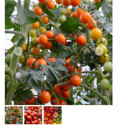 Мир томатов.Полный комплект (Кристианна Виниченко)
