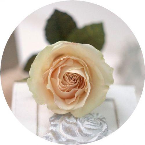 Видео-мастер класс роза Paradise (Алена Семенова)