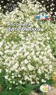 Gipsofila-metelchataya-Beloe-Oblako-SeDek