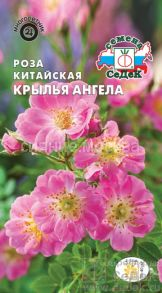 Роза китайская Крылья Ангела (СеДек)