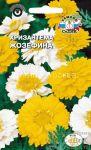 Hrizantema-uvenchannaya-Zhozefina-smes-Sedek