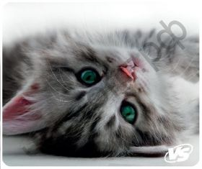 "Коврик для мыши VS ""Cat"", Рис.5 (194*233*3 мм), полипропилен+вспенен. пласт."