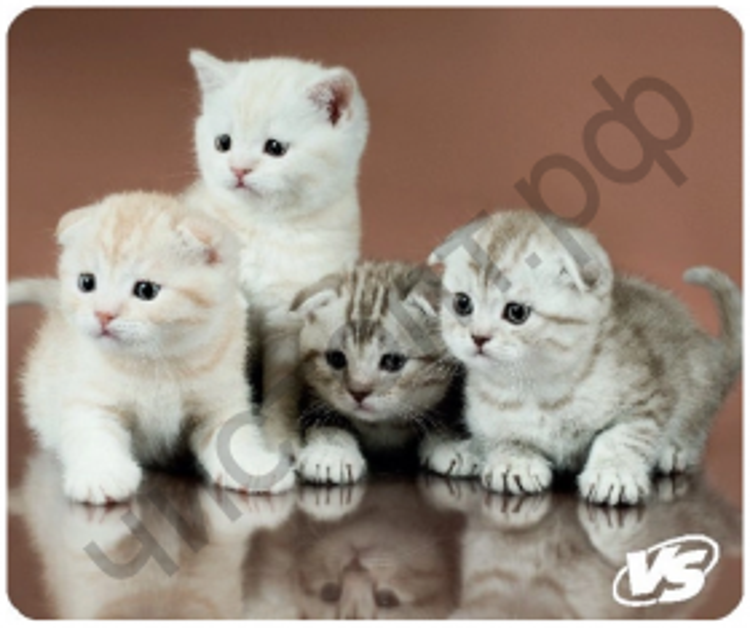 "Коврик для мыши VS ""Cat"", Рис.6 (194*233*3 мм), полипропилен+вспенен. пласт."