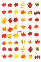 Слайдер дизайн SP.5 листья, осень