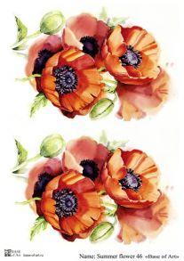 Summer flower 46