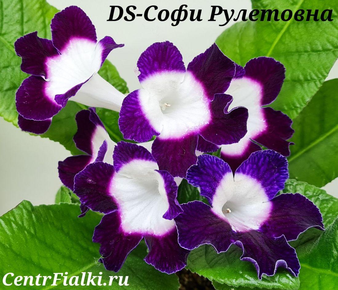 DS-Софи Рулетовна (П. Еникеев)