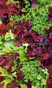Смесь листвых салатов Палитра, на ленте, 8 м (Уральский Дачник)