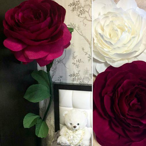 Бордовая роза