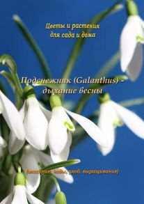 Подснежник (Galanthus) – дыхание весны