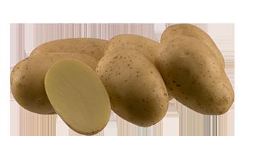 Картофель сорта Аризона(10шт)