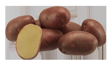 Картофель сорта Эволюшн 10 шт