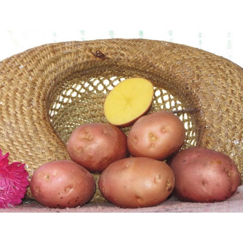 Картофель Белароса 10 шт