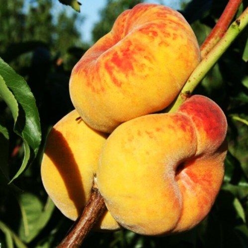 Саженцы инжирного Персика Сорт Бельмондо  отправка с 1 сентября2020г