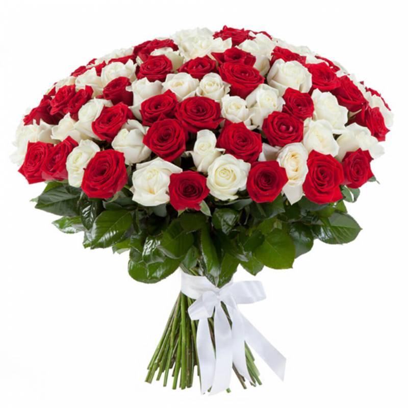 101 красная и белая роза 70 см