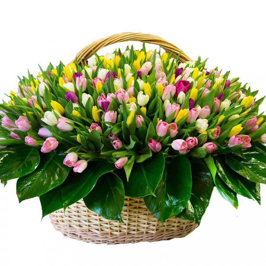191 тюльпан в корзине